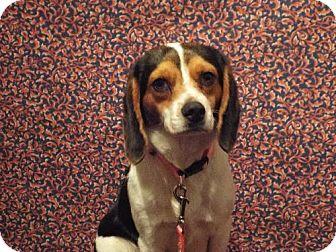Beagle Mix Dog for adoption in Murphy, North Carolina - Jenny