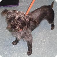 Adopt A Pet :: Faith - Orlando, FL