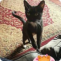 Adopt A Pet :: Binx - Fayette City, PA