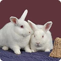 Adopt A Pet :: Donkey - Marietta, GA