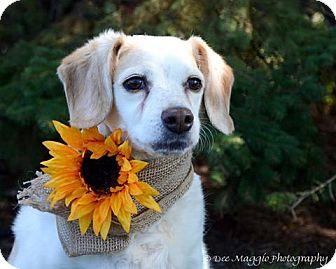Beagle Mix Dog for adoption in Hazel Park, Michigan - JLo