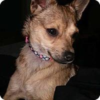 Adopt A Pet :: Tiny - Daleville, AL