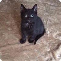 Adopt A Pet :: Big Al - Chicago, IL