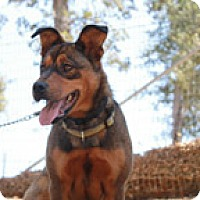 Adopt A Pet :: Meesha - Jamestown, CA