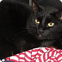 Adopt A Pet :: OLAF - Clayton, NJ