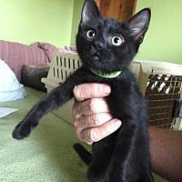 Adopt A Pet :: Charity - West Palm Beach, FL