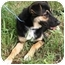 Photo 2 - German Shepherd Dog/Border Collie Mix Dog for adoption in Dripping Springs, Texas - Nana