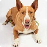Adopt A Pet :: Chico - San Ysidro, CA