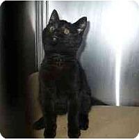 Adopt A Pet :: Misty Dawn - Colmar, PA