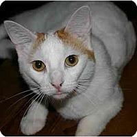 Adopt A Pet :: Fern - Montgomery, IL