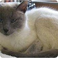 Adopt A Pet :: Tawny - Warren, MI