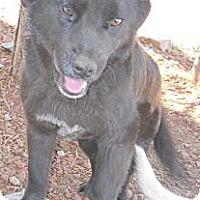 Adopt A Pet :: Panda - dewey, AZ