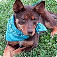 Adopt A Pet :: COCO - Leland, MS