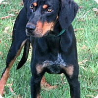 Adopt A Pet :: COLBY - Leland, MS