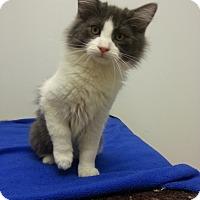 Adopt A Pet :: Houston - St. Louis, MO
