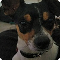Adopt A Pet :: Astin (Tin) - Santa Rosa, CA