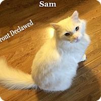 Adopt A Pet :: Sam - Bentonville, AR
