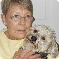 Adopt A Pet :: Zak - Plain City, OH
