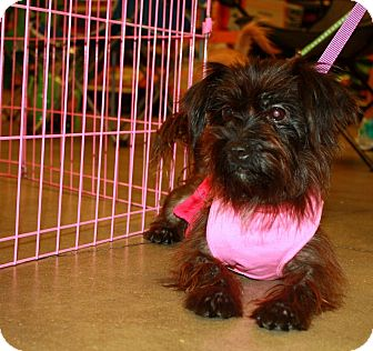 Terrier (Unknown Type, Small) Mix Dog for adoption in Fort Myers, Florida - Mandy