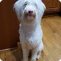 Adopt A Pet :: Blanca - Dacula, GA