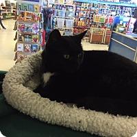 Adopt A Pet :: Acanna - Manchester, CT
