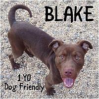 Adopt A Pet :: BLAKE - Tinton Falls, NJ