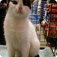 Adopt A Pet :: Batman - Columbus, OH