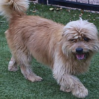 Adopt A Pet :: Hartford - Bedminster, NJ
