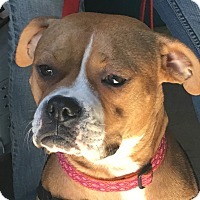 Adopt A Pet :: Emma - Whiting, IN
