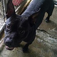 Adopt A Pet :: Peyton - Pembroke, GA