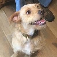 Adopt A Pet :: Norm - Savannah, GA