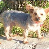 Adopt A Pet :: Maverick - Ocala, FL