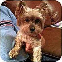 Adopt A Pet :: Coopie - Tallahassee, FL
