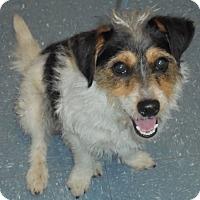 Adopt A Pet :: Sparky - Orlando, FL