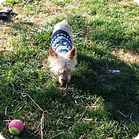 Adopt A Pet :: Noah - Ft. Collins, CO