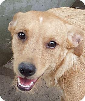 Labrador Retriever Mix Dog for adoption in Preston, Connecticut - Bitsy & Zelda AD 03-26-16