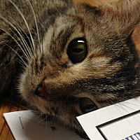 Adopt A Pet :: Tiny - LaGrange, KY