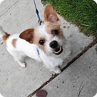 Adopt A Pet :: Louie - Meridian, ID