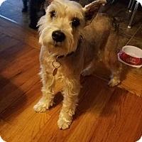 Adopt A Pet :: Bolt - Springfield, MO