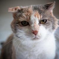 Adopt A Pet :: Kiwi - Santa Rosa, CA