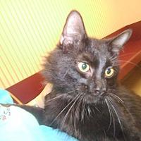 Adopt A Pet :: Barney - Muscatine, IA