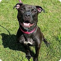 Adopt A Pet :: Cleo - Lisbon, OH