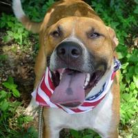 Adopt A Pet :: Donnie - Helena, AL
