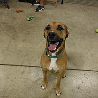 Adopt A Pet :: DENALI - Sandusky, OH