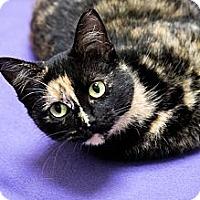 Adopt A Pet :: Tortellini - Chicago, IL
