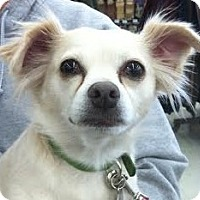 Adopt A Pet :: Wilma ~ Adopted - Troy, OH