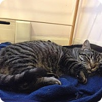 Adopt A Pet :: Monika - Chicago, IL