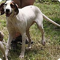 Adopt A Pet :: Heather(200$ Happy Homing-days - Staunton, VA