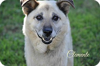 Shepherd (Unknown Type) Mix Dog for adoption in Youngwood, Pennsylvania - Clemente