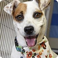 Adopt A Pet :: Coraline - Marietta, GA